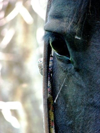 horse 5